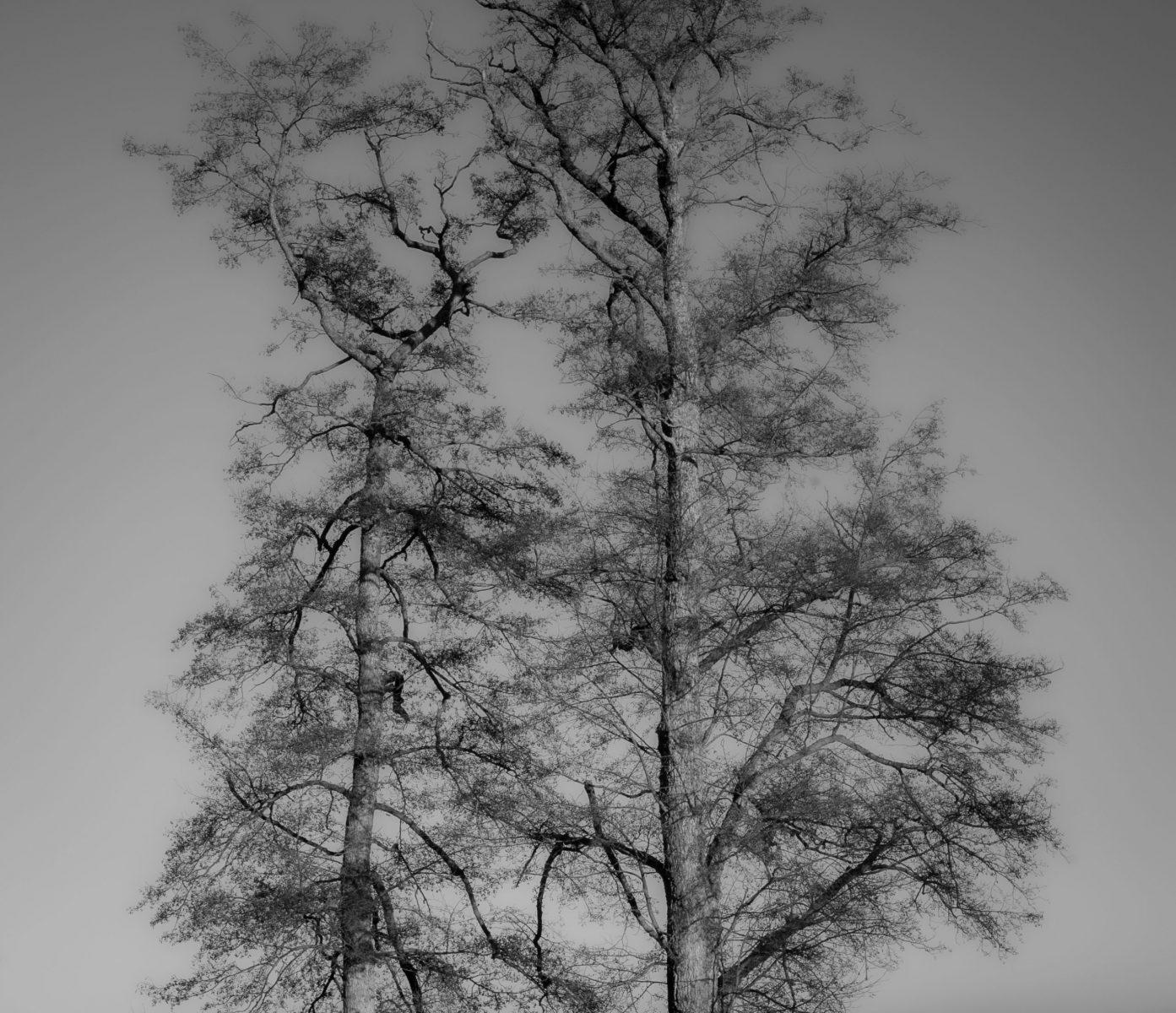 © Patrick Baltatzis